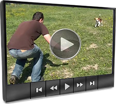 La verit sul beagle for Ti richiamo