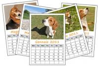 Realizziamo il calendario 2011 di AmicoBeagle!