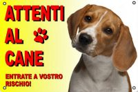 addestrare un beagle a fare la guardia foto