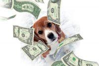 beagle prezzo foto