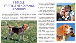 Amico Beagle su Pet 4 You