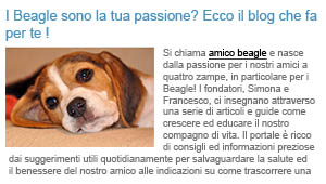 Amico Beagle su petadvisor24.it