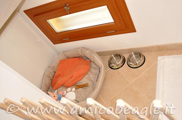 Preparare la casa per l'arrivo del beagle foto