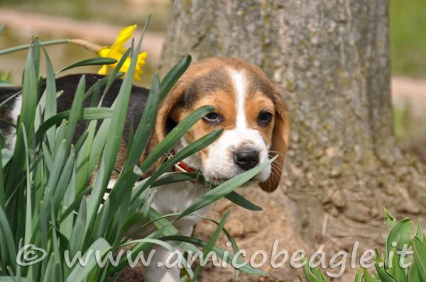 Il giardino del Beagle foto