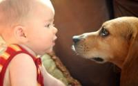 Cani e bambini foto
