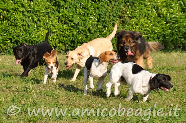 area cani foto