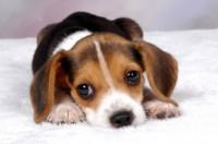 scegliere nome cucciolo foto