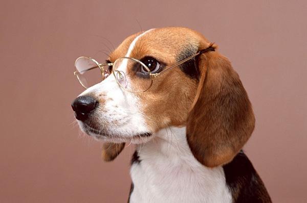 non umanizzare cane foto