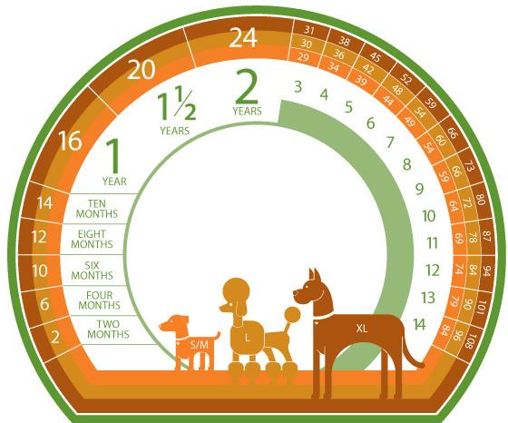 Calcoliamo l'età del nostro cane
