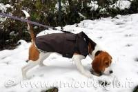 Accessori per il Beagle: cappottini & impermeabili foto