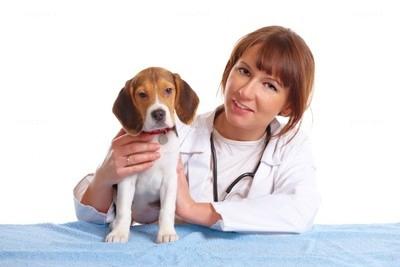 prima visita veterinario cane foto