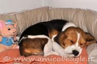 confinamento del cucciolo