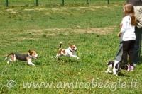 La Puppy Class
