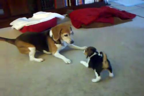 incontro cani foto