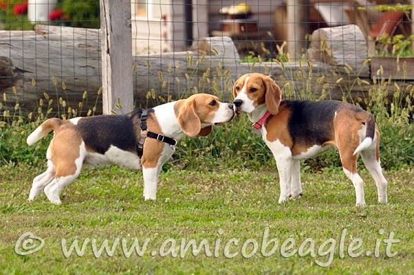 segnali calmanti cane foto