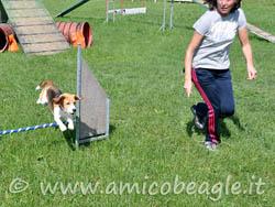 beagle scopo vita foto