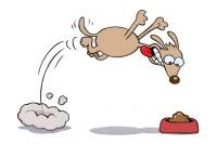 beagle vorace