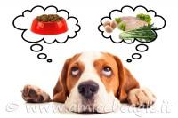 Beagle alimentazione casalinga foto