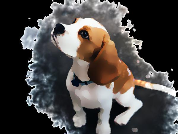 beagle carattere foto