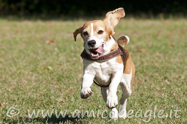 cane felice foto