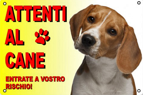 beagle cane da guardia foto