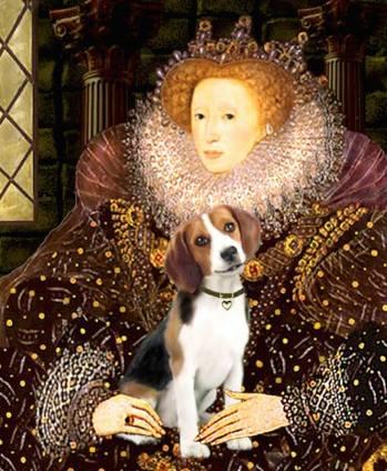 beagle elizabeth foto