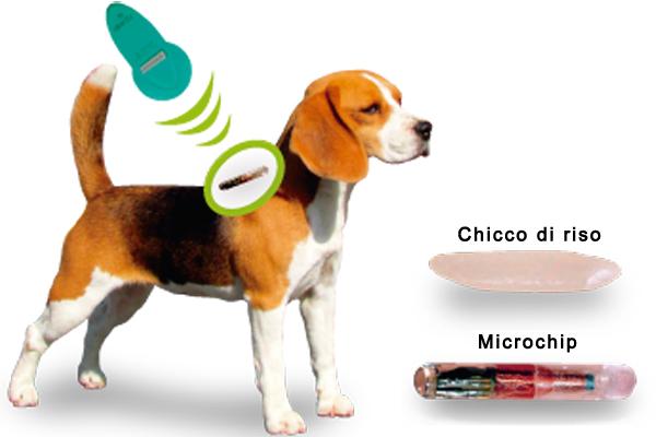 microchip cane