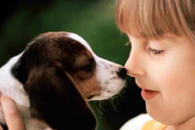 beagle bambini foto