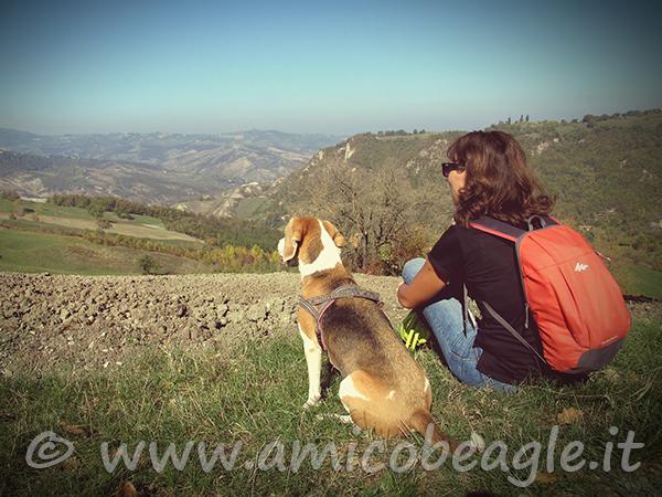 passeggiando con il cane foto