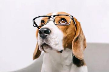 Come vedono i cani foto