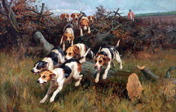 beagle cane foto