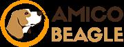 AmicoBeagle