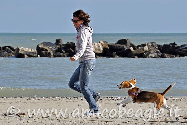 beagle opinioni foto