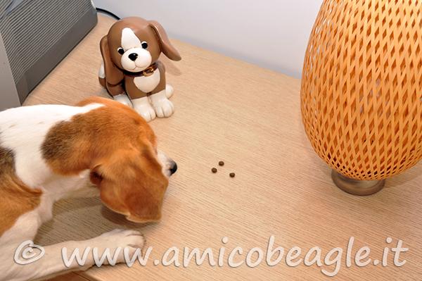 ricerca olfattiva cane foto