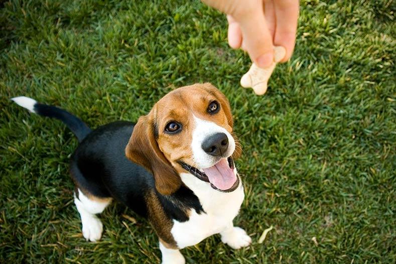 Intolleranze alimentari cani: come riconoscerle e affrontarle
